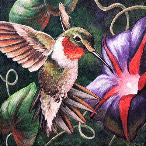Ruby-Throated Hummingbird and Morning Glory
