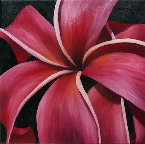 Pink Plumeria #2