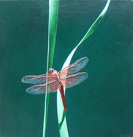 Dragonfly on Blade of Grass #5