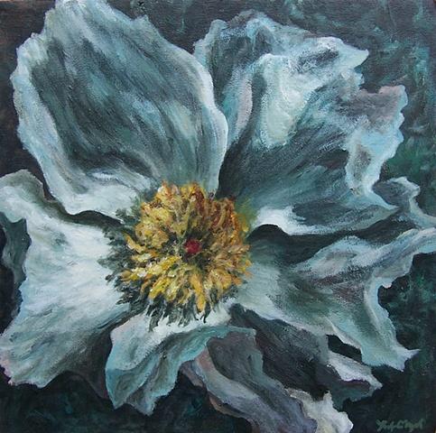 Blue Prickly Poppy