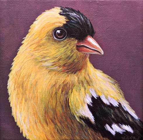 Goldfinch portrait #2