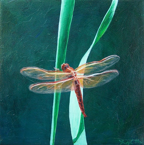Dragonfly on Blade of Grass #7