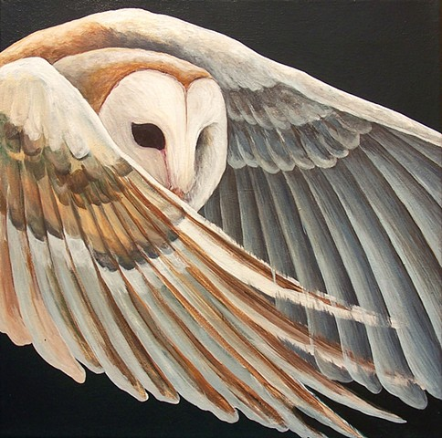 Barn Owl in flight (step 6)