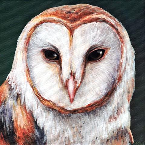 Barn Owl portrait #5