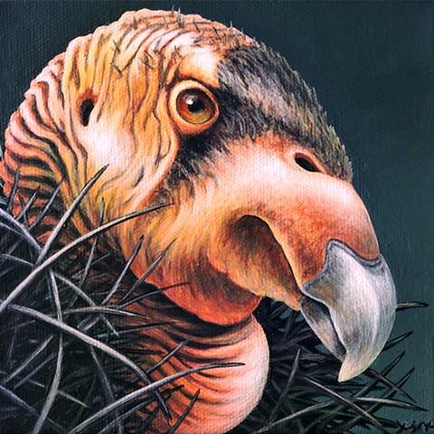 California Condor Portrait