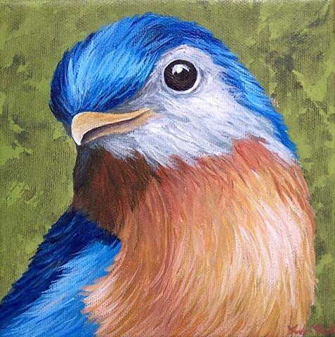 Bluebird portrait #1