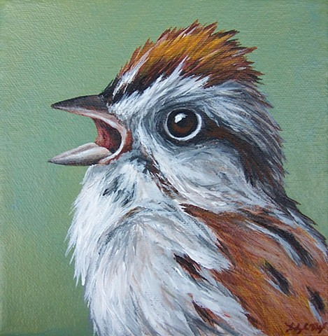 Sparrow portrait