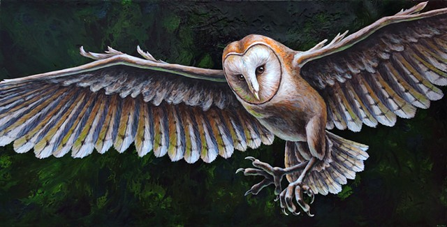 Barn Owl in Flight #2