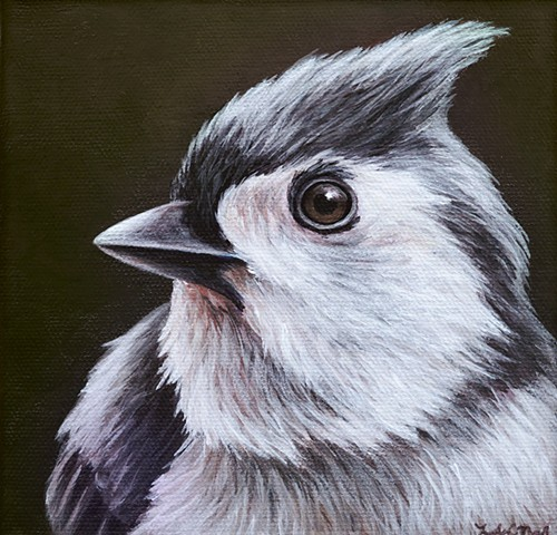 Tufted Titmouse portrait #2