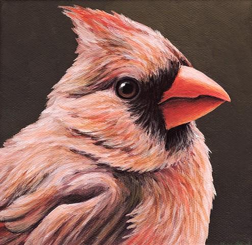Cardinal portrait #4
