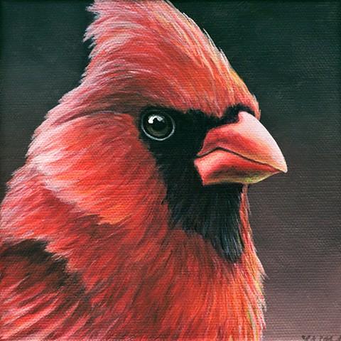 Cardinal portrait #15