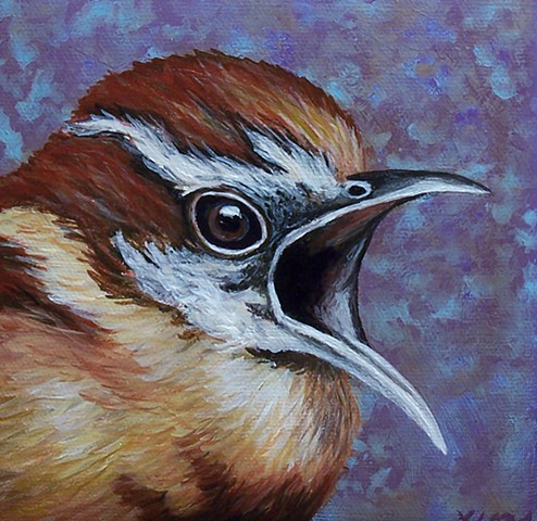 Carolina Wren portrait