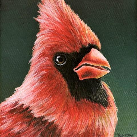 Cardinal portrait #11