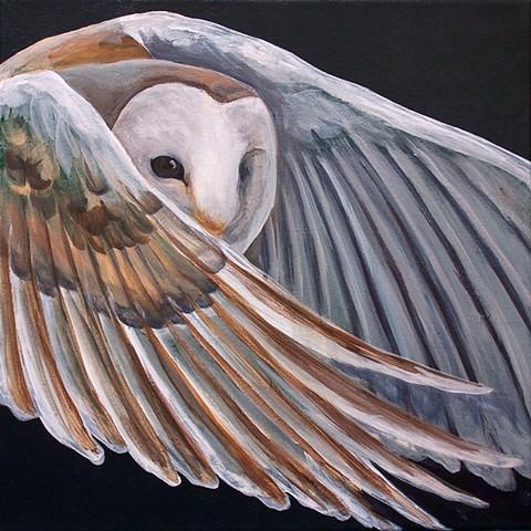 Barn Owl in flight (step 4)