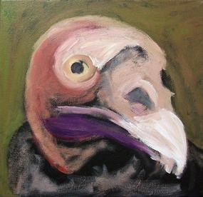 Turkey Vulture portrait (step 1)