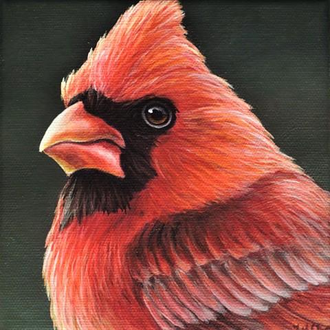 Cardinal portrait #12