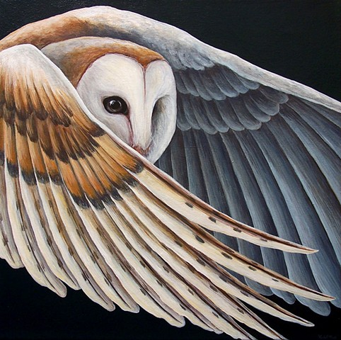 Barn Owl in flight (step 7/ finished)