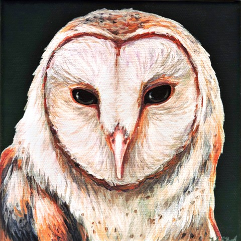 Barn Owl portrait #4