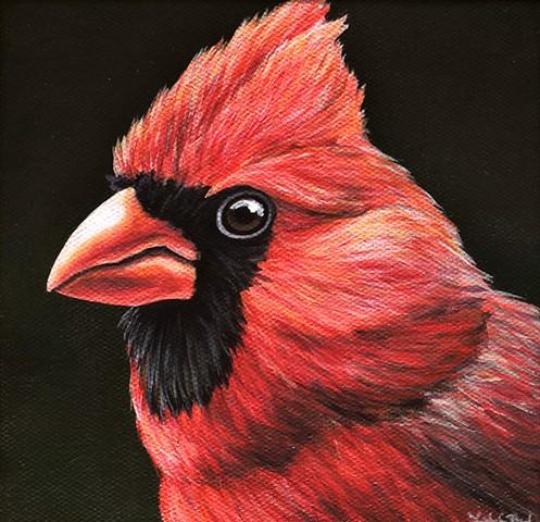 Cardinal portrait #5