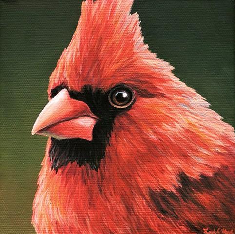 Cardinal portrait #8