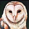 Barn Owl portrait #4