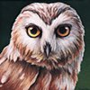 Northern Saw-whet Owl portrait #2