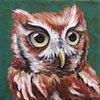 Eastern Screech Owl portrait