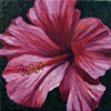 Pink Hibiscus #2