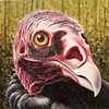 Turkey Vulture portrait (step 10/ finished)