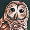 Barred Owl portrait #4