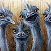 Four Emus (study, framed)