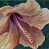 Pale Hibiscus #2