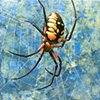 Black and Yellow Garden Spider #2