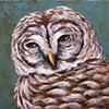 Barred Owl portrait #1