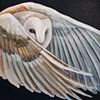 Barn Owl in flight (step 5)