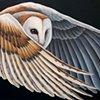 Barn Owl (in flight)