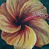 Ochre Hibiscus #2