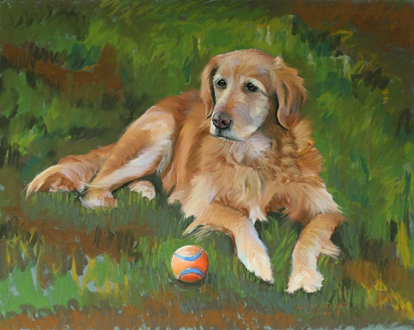 Golden Retriever Pastel Portrait, Jan Maitland, dog portrait, golden retriever, dog with ball, pastel dog painting,