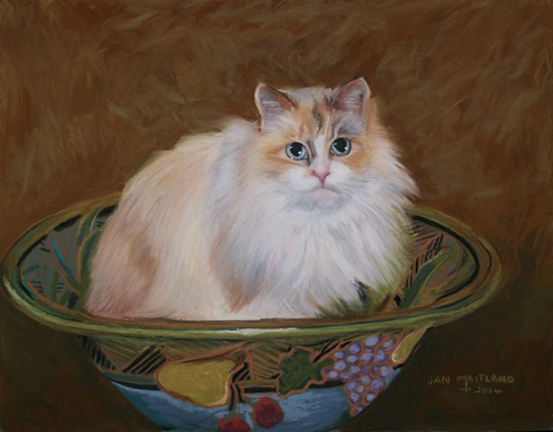 cat portrait by jan maitland, oregon pastel artist