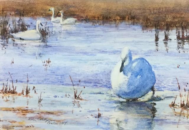 watercolor, swans, Loess Hills Wildlife Refuge