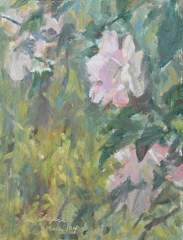 Roses Overland Park Kansas Arboretum