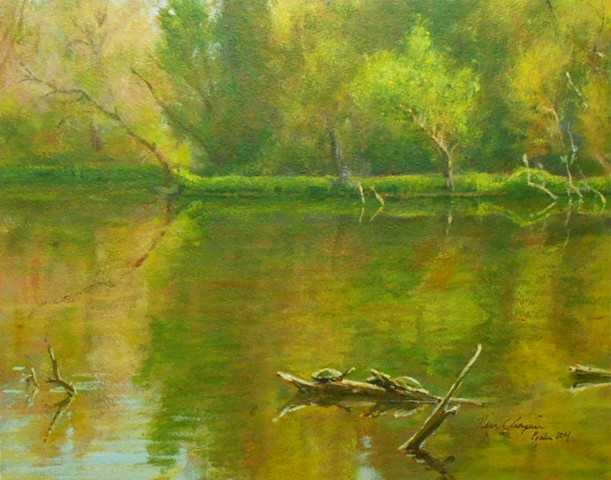 turtles James A. Reed Wildlife Area