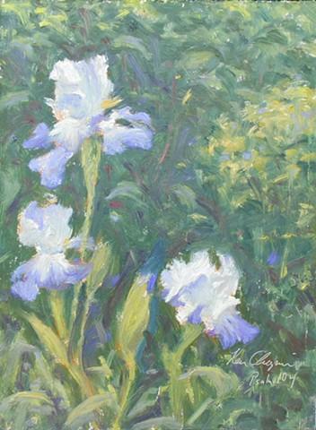 Irises Overland Park Kansas Arboretum