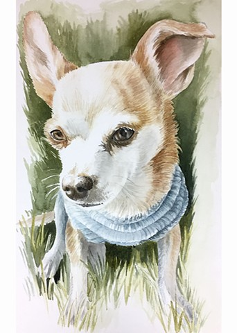 Pet Portrait- Chihuahua