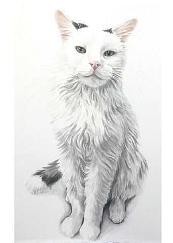 Pet Portrait Painting- cat