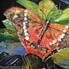 Butterfly Fatima