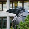 Raven detail