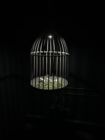 dead porcelain canary in a cage sculpture by bethany krull