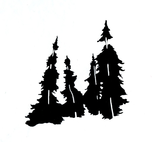 black spruce drawing