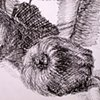 Detail of Cross-Hatching_2